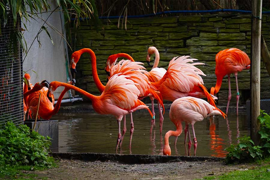 ménagerie du jardin des plantes flamants rose